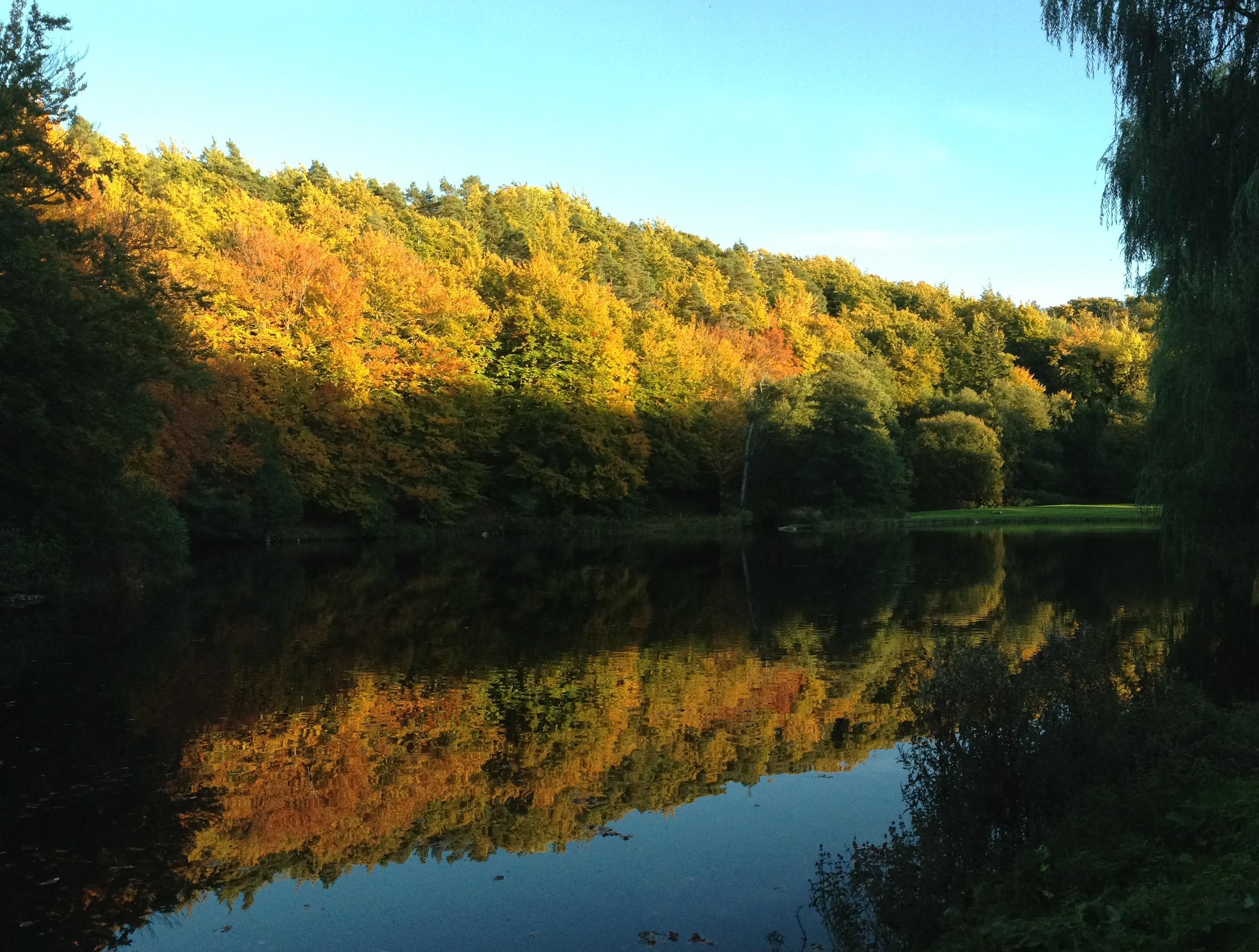 skog vatten